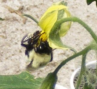 Bee2crop