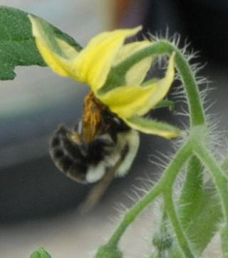 Bee5crop