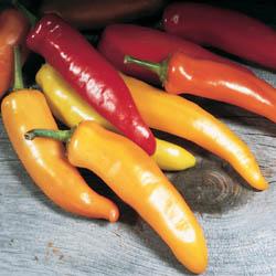 Pepper hungarian wax