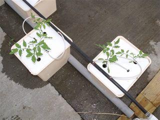 Planting_3.8_001