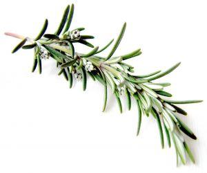 Rosemary_herb